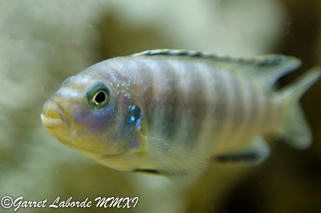 My Buddys Underwater Pets Photography Forum