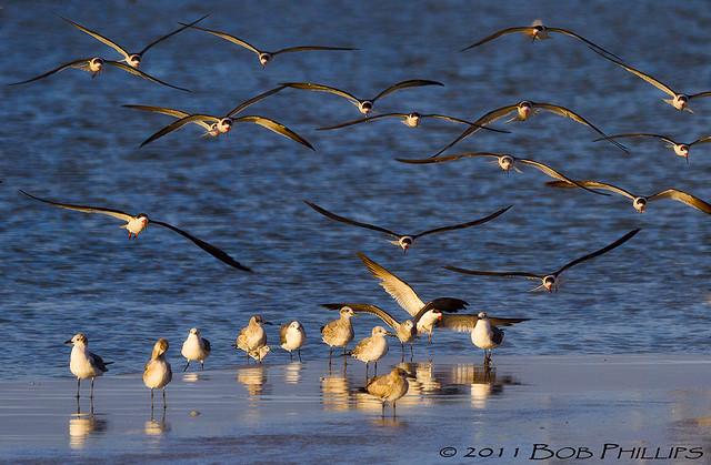 Birds Of Fort Myers Beach