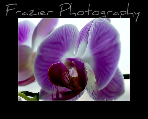 Purple & White by Enjoy the journey...Not the Destination~