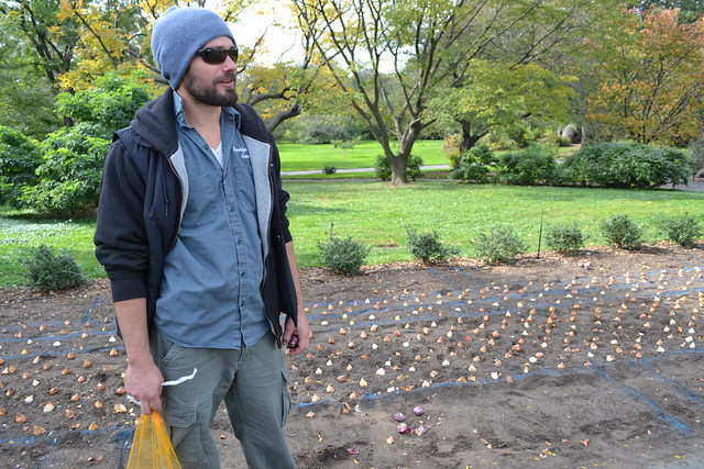 After BBG curator Cayleb Long sketches his plans and calculates the number of bulbs needed, each bulb is placed in its proper spot before planting begins. Photo by Elizabeth Peters.