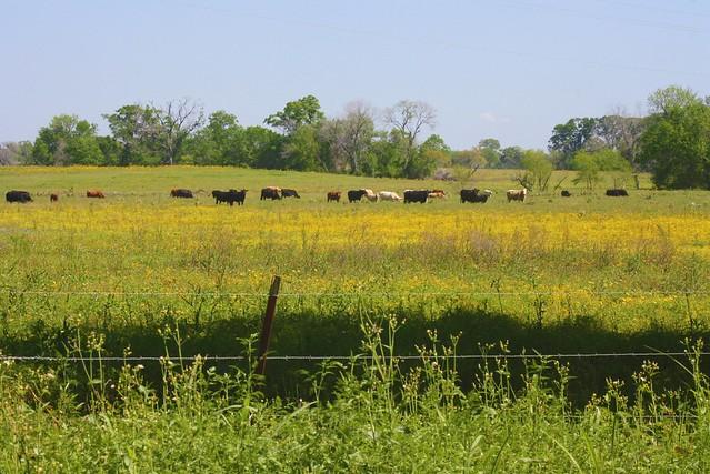 Search Results For Spring Texas Calendar 2015