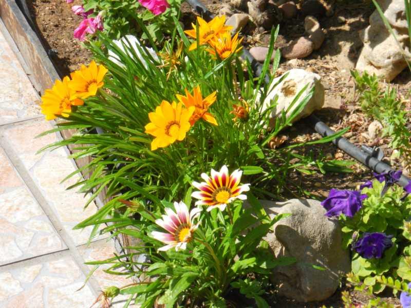 Flores en el jardín de los enanitos