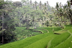 Bali images