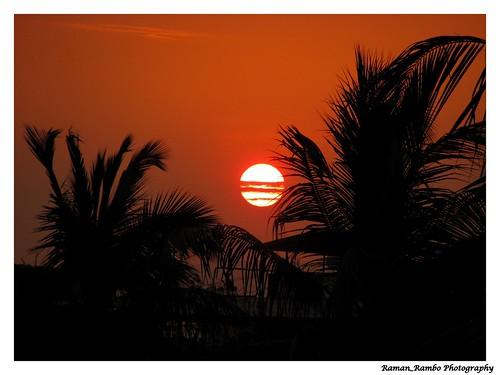 trees sunset coconut