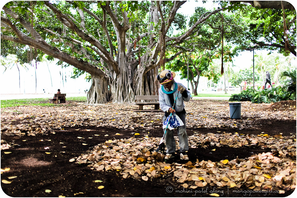 sweeping leaves of the waikiki banyan trees