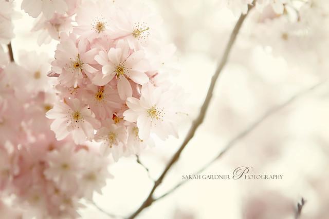 Floral_blog_019
