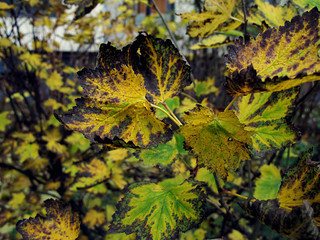 (303/365) Leaves