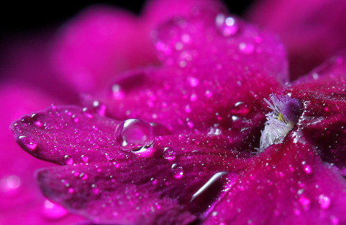 Purple Flower Macro With Water Drops