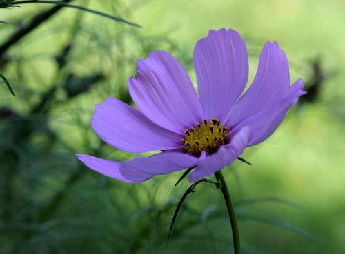 Wien - Augarten - Blume