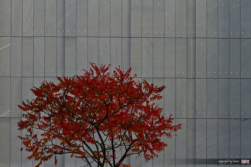 red_and_gray