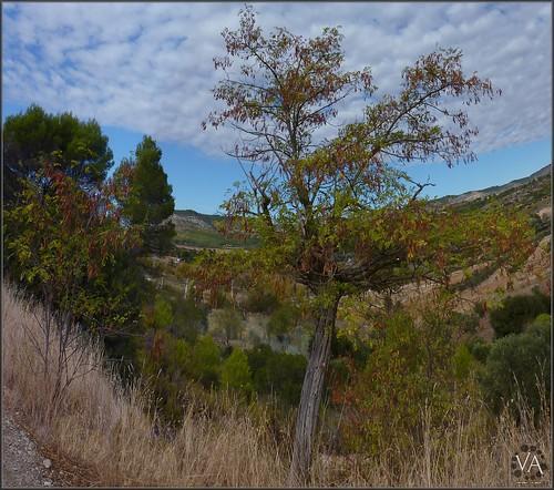 Panoramic view near Sayaton (Guadalajara, Spain) / Vista panoramica cerca de Sayaton (Guadalajara)