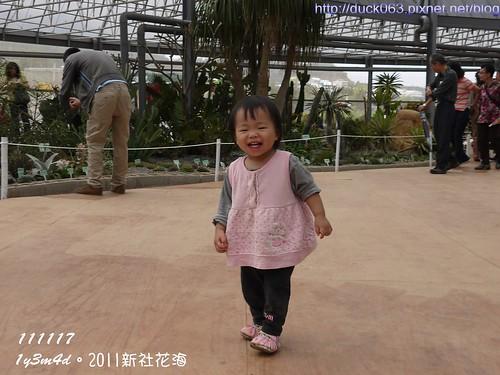 P1130414花海