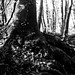 La Fageda d'en Jordà (bosque tenebroso) - 2