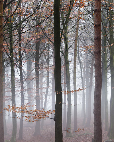 autumn trees cloud mist leaves vertical fog pine forest complex atmospheric beech