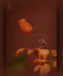 ¸.•*´AUTUMN ♥ IMPRESSION`*•.¸
