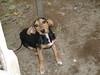 Foto adozione : FUNNY,cucciola, 5 mesi, taglia medio contenuta ( Novi Ligure, Alessandria , Ovada, Tortona , Genova , Levante)
