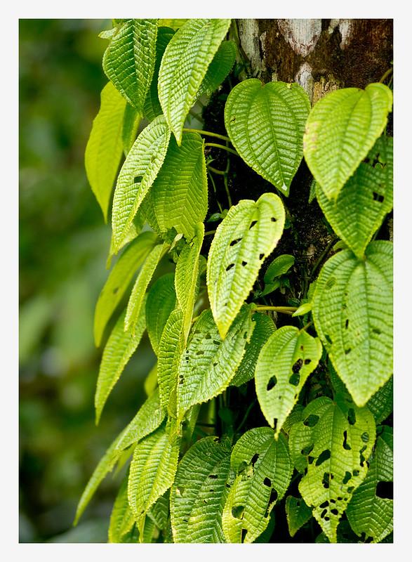 Flora, Costa Rica