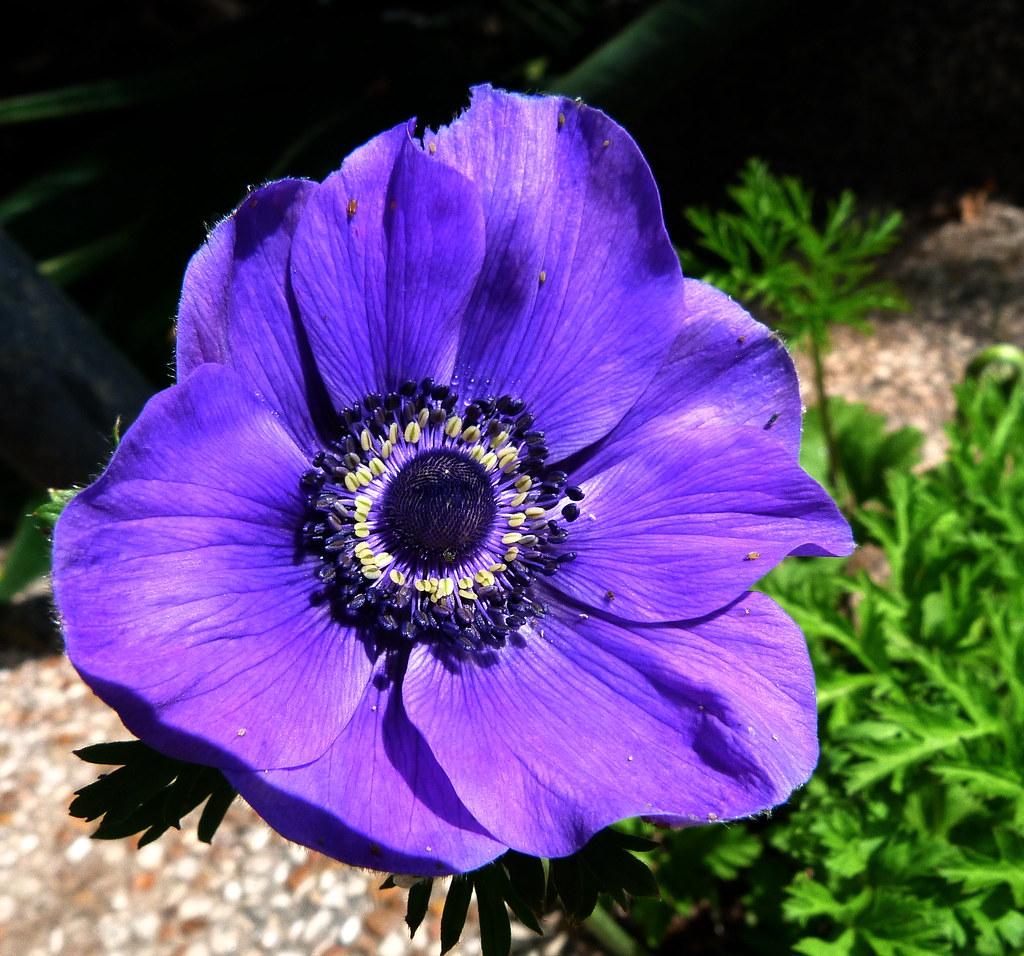 24-03-2012-spring-celebration-a1