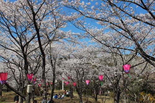 sakura-t-2012-4-1-02