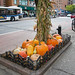 Harvest Celebration Along 34th Street