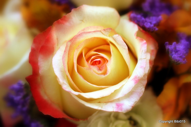 My wonderful Rose