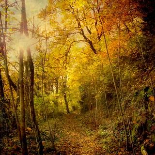 ✿ Forest roads ✿ III