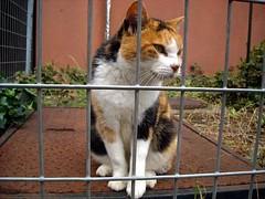 cat 051