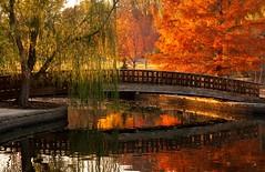 Reflection of Japanese Bridge at Jacob Loose Park