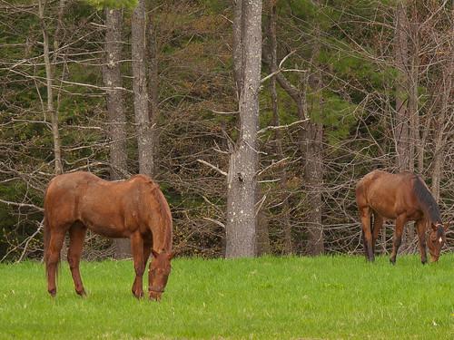 Horses by John M Poltrack