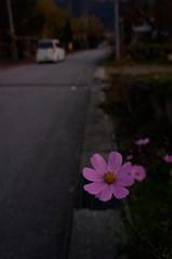 20111028 Hida 11