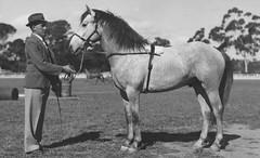 Kemp_Dudley_show_horse_c1941