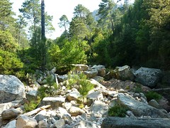 Arrivée au ruisseau de Peralzone (vue vers l'amont)