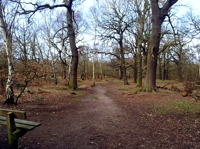Sherwood Forest-Nottinghamshire, England