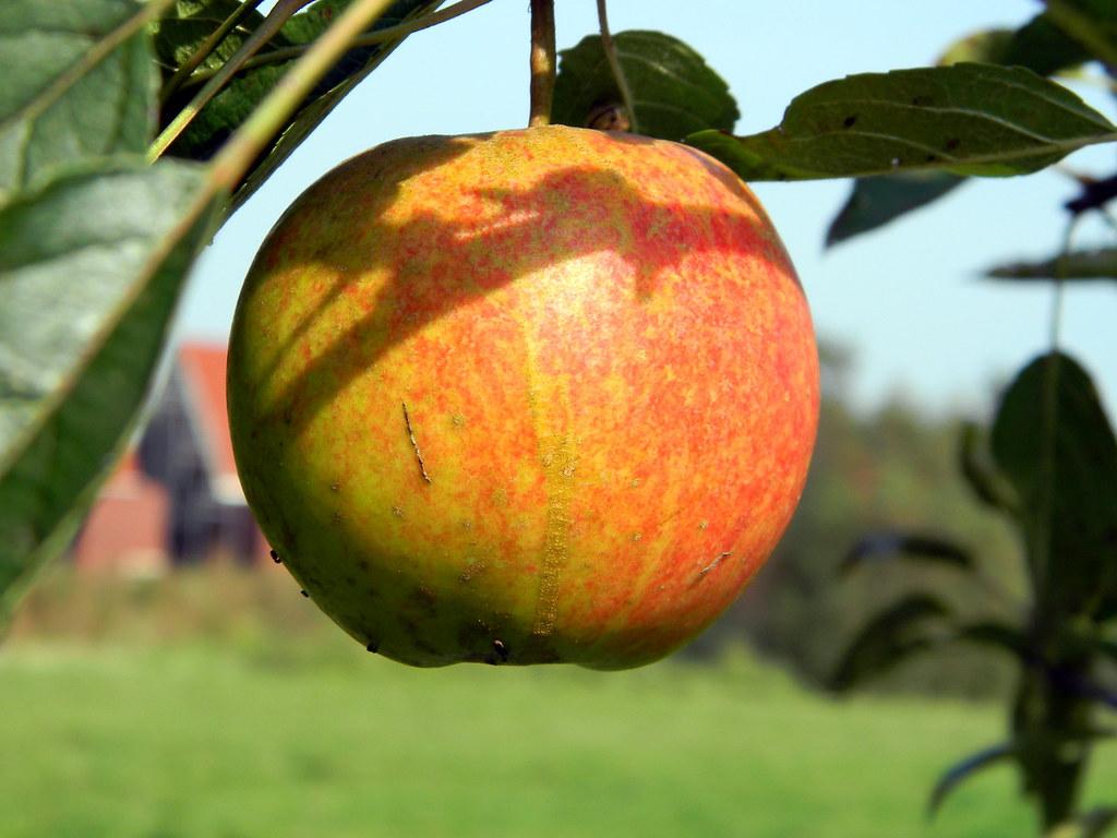 Apple by Arend Jan Wonink