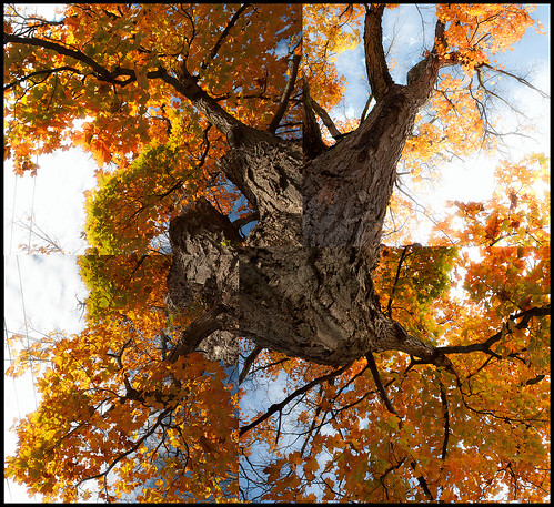 sky tree fall yellow clouds view earth trunk