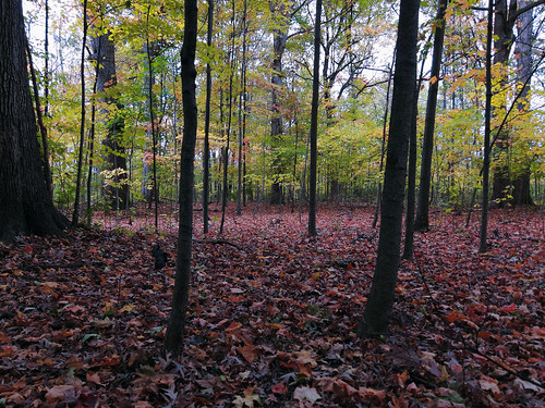 autumn trees fall leaves woods october indiana canon60d canoneos60d fwfg