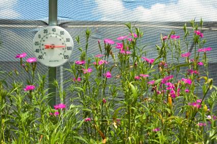 greenhouse temperature