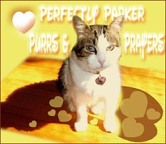 Purr and Pray for Perfectly Parker.jpg