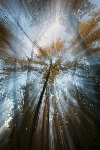 autumn-forest-rays