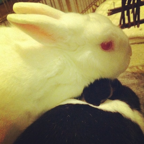Two bunnies are better than one.