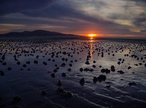 Sand worms & sunrise