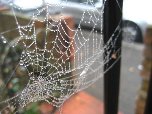 Dewy cobwebs