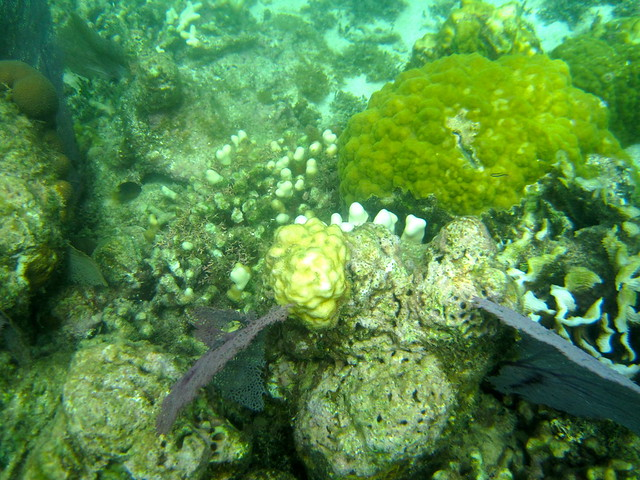 snorkeling the coral reef second largest barrier reef in the world roatan honduras