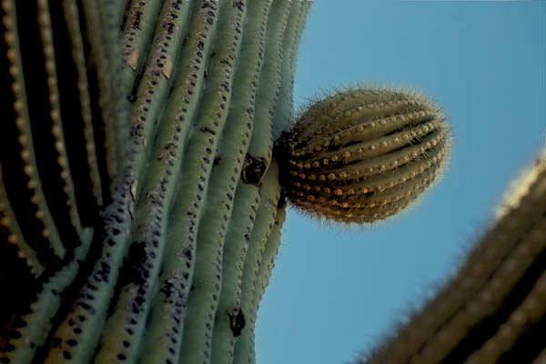 Cactus Catch