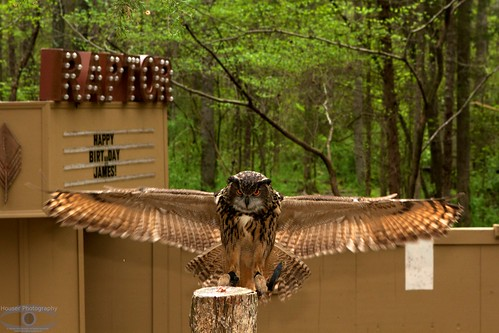 Eagle Owl 1223