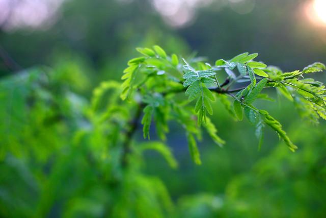 green bursting forth