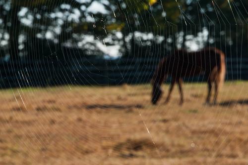 horse bokeh kentucky spiderweb nhm horsefarm ngm herowinner npgm lexitonkentucky