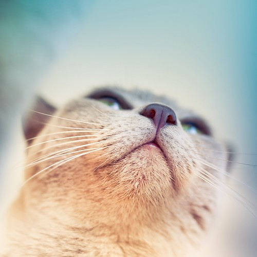 Cat by ►CubaGallery