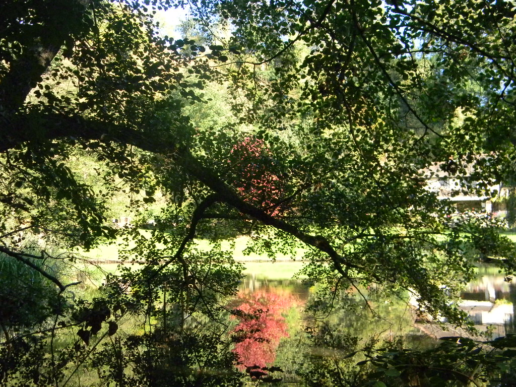 Reflected maple An irridescent maple reflects across a lake. Guildford to Horsley