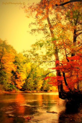 autumn trees usa art fall nature water beauty leaves forest reflections river landscape rocks colorful stream soft natural pennsylvania ngc seasonal scenic pa picturesque tress waterscape pennsyvania schnecksville